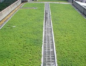 改性沥青聚乙烯胎种植屋面用耐根穿刺防水卷材
